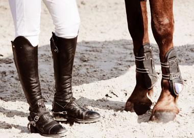 Équipements pour le cheval et cavalier