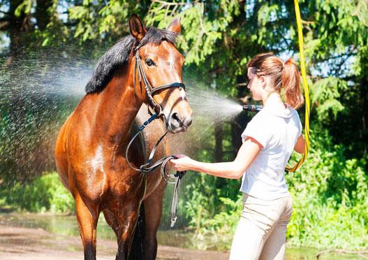 Conseil pour bien entretenir un cheval