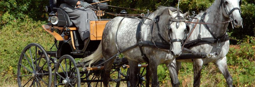 attelage avec les chevaux